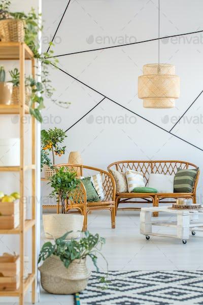 Sofa, chair and plants