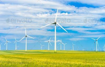 eolian green field