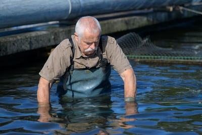 older guy in the water at caviar farm