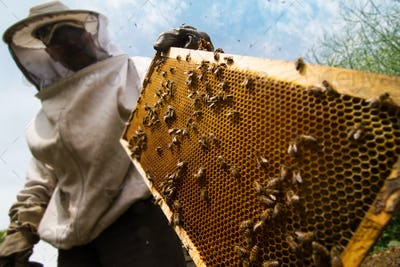 beekeeper working on beehive