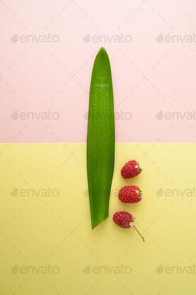 One raspberry and a leaf of a tropical plant on a pastel yellow-