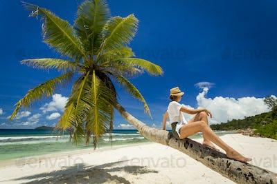 Relaxing On Palmtree