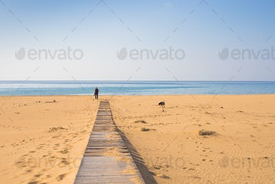 Man with dog walking on the wooden path on the beach and looking into the distance of the ocean