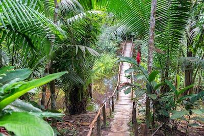Bridge in a Rain Forest