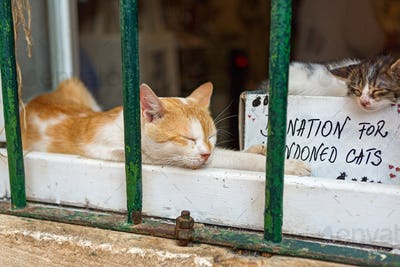 Help  for stray cats