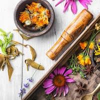 motley healthy herbs