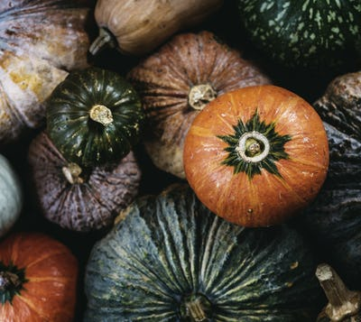 Aerial view of diverse fresh pumpkins
