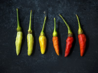 Aerial view of multi color of chili pepper on black background