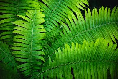 Fern leaves full screen