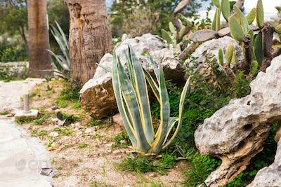 Green Cactus closeup.