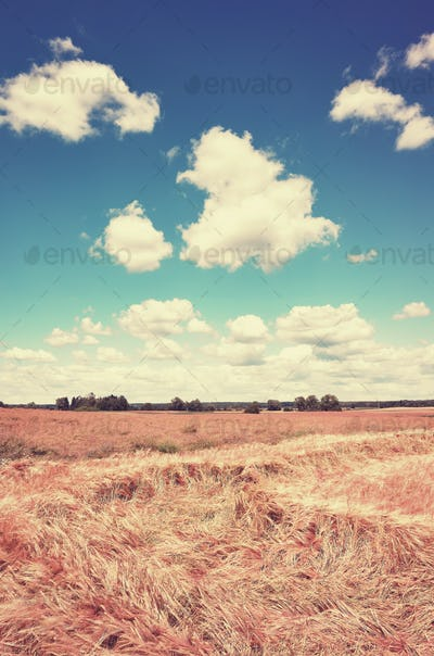 Vintage toned picture of a summer field