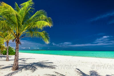 Palm trees on a amazing tropical beach