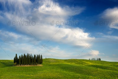 Cypress tree forest in Tuscany