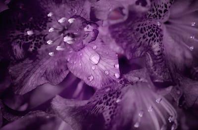 Deep purple flower