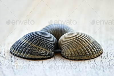 Beautifull shells in design concept