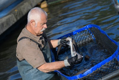 Fish farmer in water