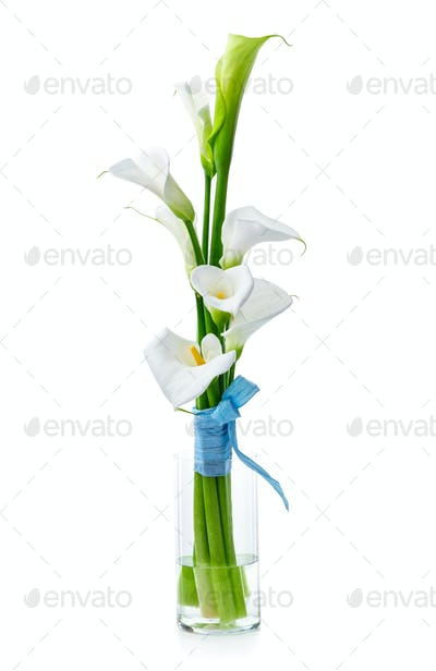 Bouquet of white calla lilies in glass vase