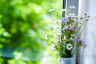 Field flowers of chemist's daisy near the window