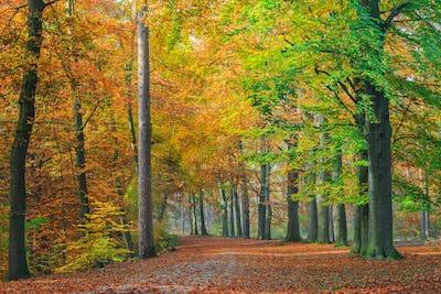 Autumn foliage along a forest path