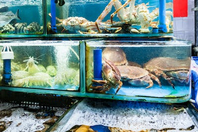 crabs and shrimps in fish market in Guangzhou city