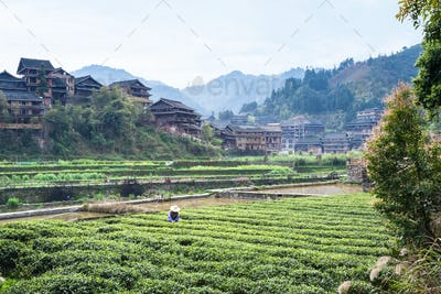 view of tea field near canal in Chengyang