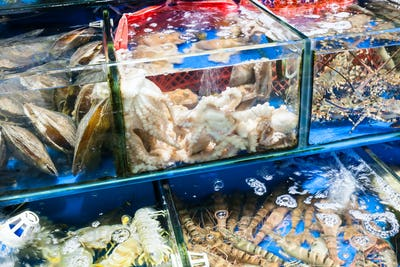 octopus, langoustines in fish market in Guangzhou