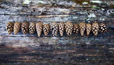 Pine cones on old wooden background with copy space.