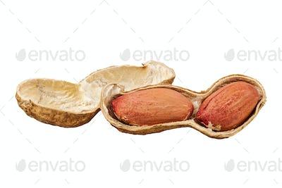 Peanuts (Arachis hypogaea) on a white background