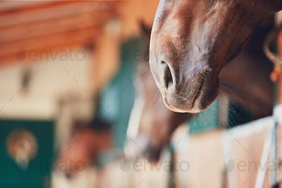 Nose of the horse