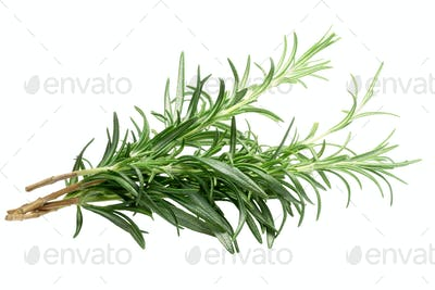 Rosemary (Rosmarinus officinalis), paths