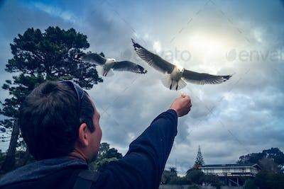 Feeding the seagull