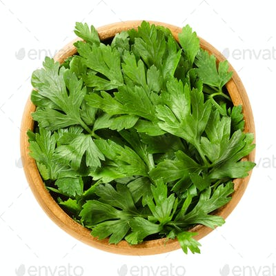 Fresh flat leaf parsley in wooden bowl over white
