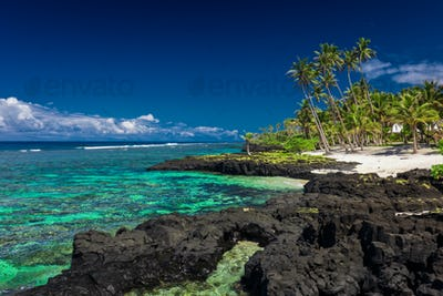 Coral reef on Upolu, Samoa Islands.
