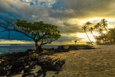Single tree and coconut palm trees in the sunset on Samoa Island