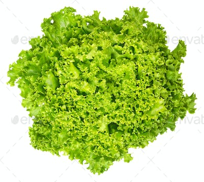 Lollo Bianco lettuce from above on white background