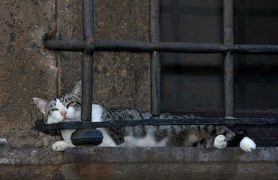 Cat Nap, Nepi Italy