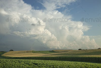 Corn and Soybean Fields Below Dramatic Clouds