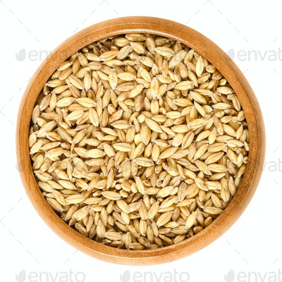 Hulless barley in wooden bowl over white