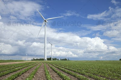 Wind Turbines and Soybean Fields in Midwest USA