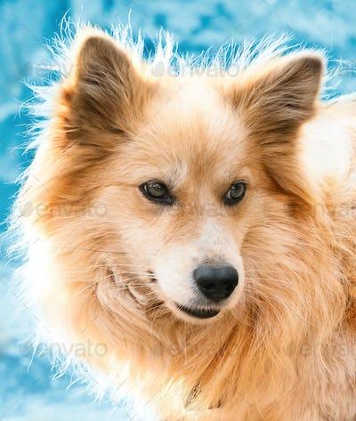 Portrait of a beautiful dog in winter