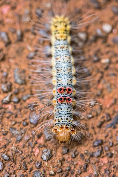 Caterpillar on the ground