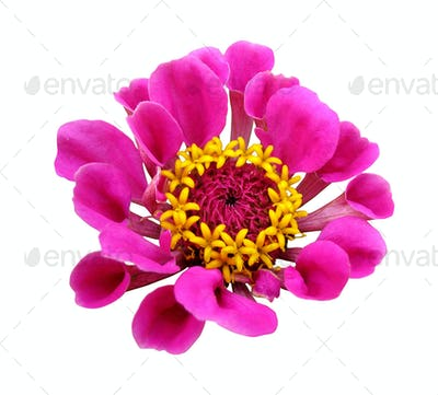 Flowers with clipping path