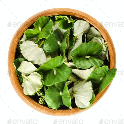 European beech seedlings in wooden bowl over white