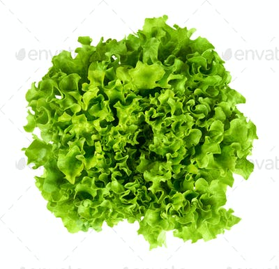 Batavia head of lettuce from above on white background