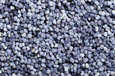 Blue poppy seeds close up macro photo