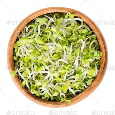Radish sprouts in wooden bowl over white