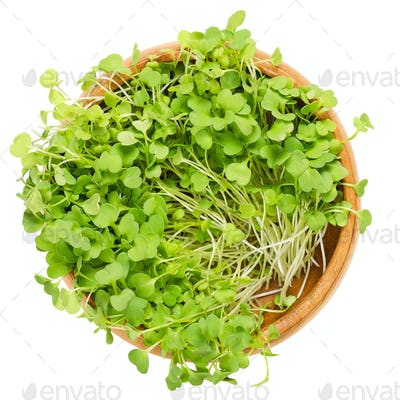 Rocket salad sprouts, arugula, in wooden bowl over white
