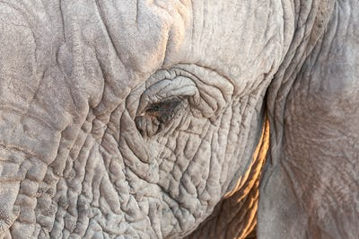 Close-up of eye of African elephant in Northern Namibia