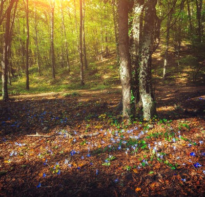 Autumn forest with flowers at sunset. Beautiful landscape