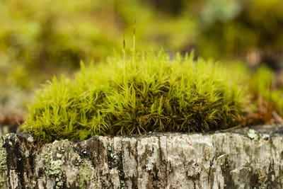 Close up of green moss undergrowth
